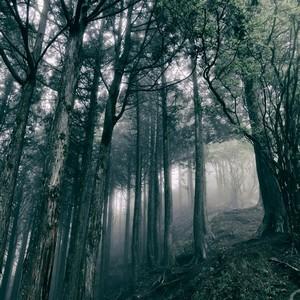 Akira Kosemura – In The Dark Woods