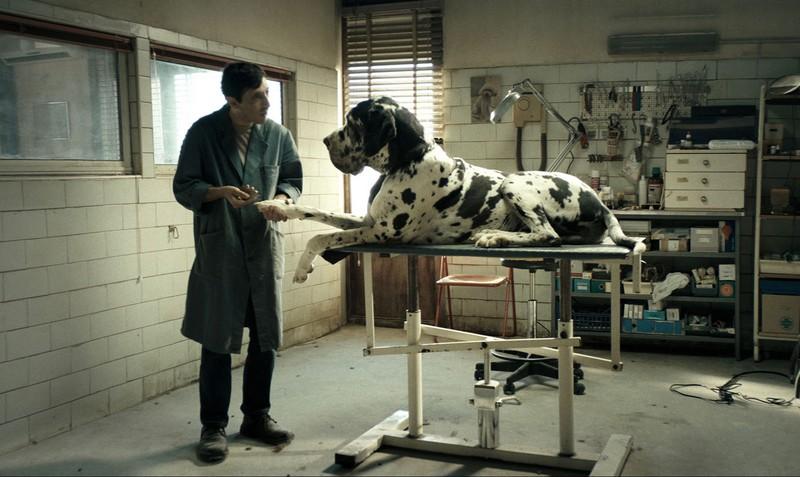 Dogman Photo Marcello Fonte