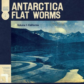 Flat Worms Antartica